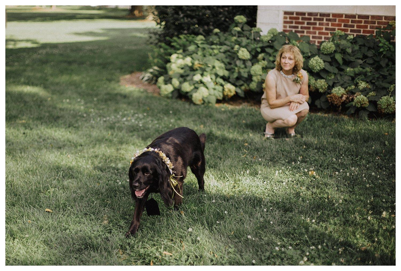 Champaign dog ringbearer